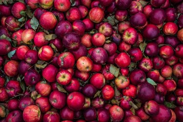 Hundreds of red apples; Photo by StockSnap, Sydney Zentz