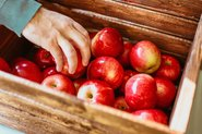 Hand grabbing apples in a wooden box; Photo by Pexels, Josh Hild